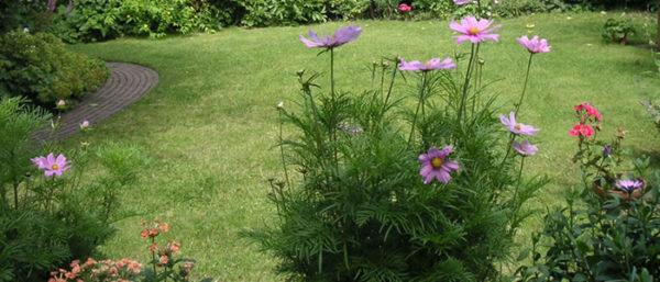 bloemen in de tuin van Hospitality Suite